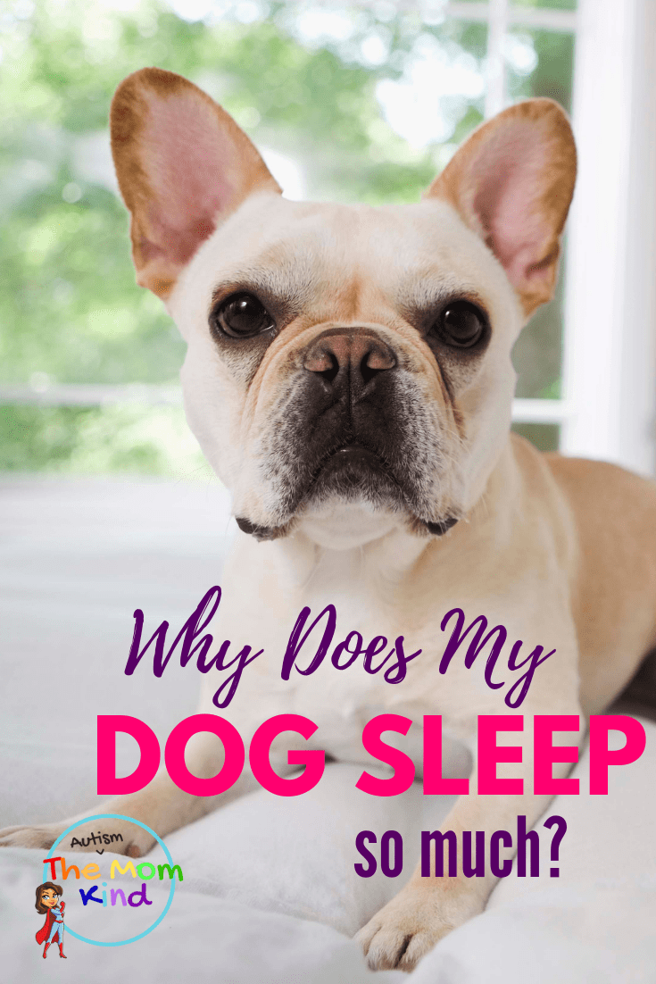 Puppies will sleep for as much as 15 to 20 hours a day and adult dogs sleep for about 12 to 14 hours a day.  Find out more by breed here. #puppies #dogcare #sleepinfo