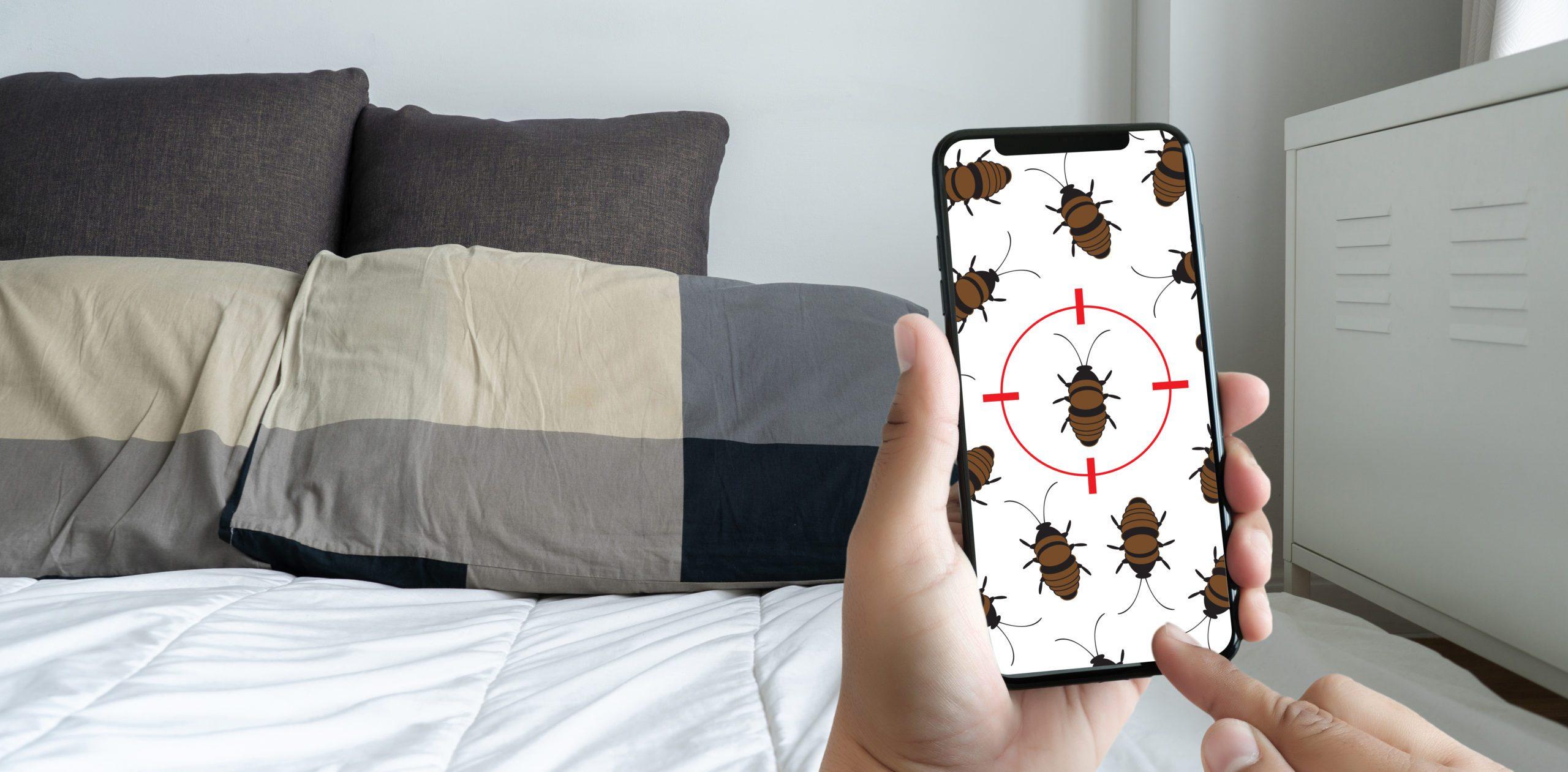 Bed Bug Infestation at Home? Safe, Effective Ways to Solve the Problem