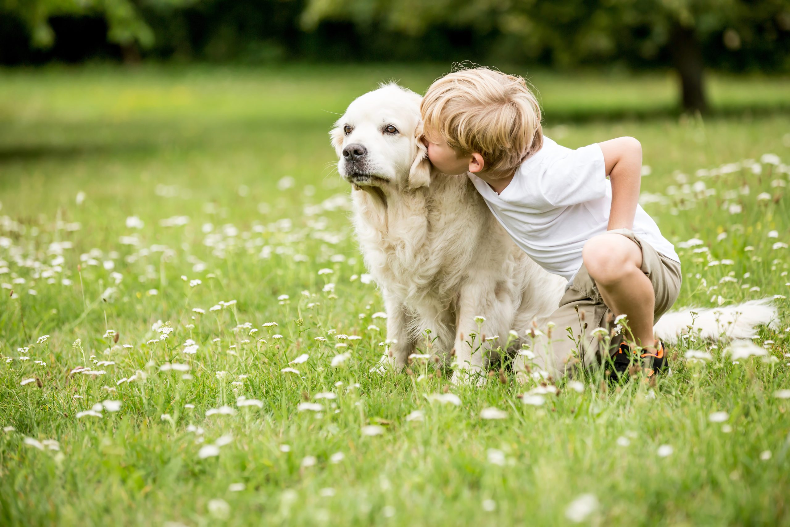 Ways Dogs Help People with Autism. Autism service dogs or even a companion dog, can make a huge difference for autistic children & adults
